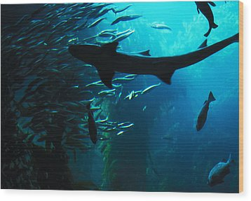 Wood Print featuring the photograph Shark Above by Carl Purcell