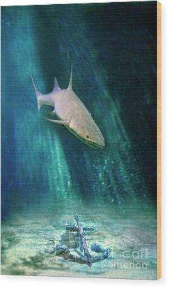 Shark And Anchor Wood Print by Jill Battaglia