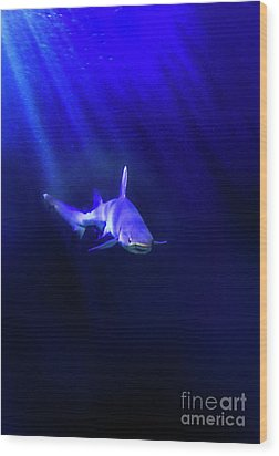 Shark Wood Print by Jill Battaglia