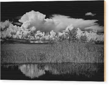 shark river slough BW Wood Print by Rudy Umans