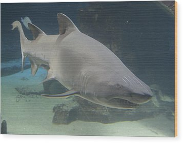 Shark Run Wood Print