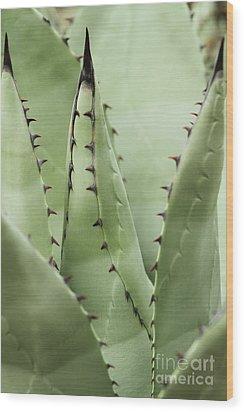 Sharp Impressions Wood Print