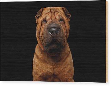 Sharpei Dog Isolated On Black Background Wood Print