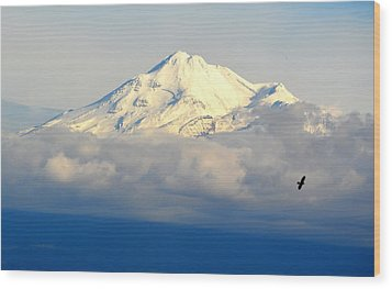 Shasta Near Sunset Wood Print by AJ Schibig