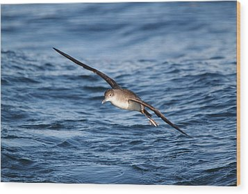 Wood Print featuring the photograph Shearwater by Richard Patmore