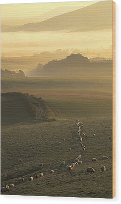 Sheep And Misty South Downs Wood Print by Hazy Apple