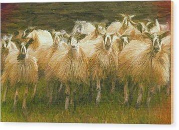 Sheep At Hadrian's Wall Wood Print