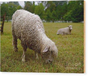 Sheep Begin A New Day Wood Print