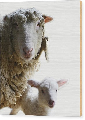 Sheep Portrait Wood Print