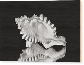Shell And Reflection Wood Print by Bill Brennan - Printscapes