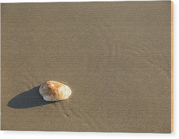Shell And Waves Part 1 Wood Print by Alasdair Turner