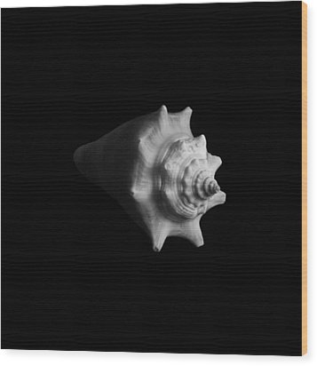 Shell No. 4 Wood Print by Henry Krauzyk