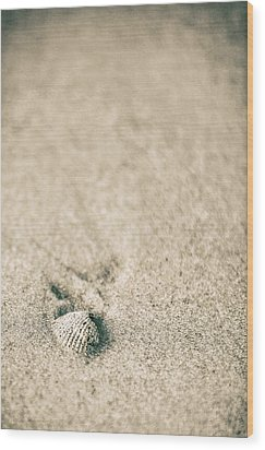Wood Print featuring the photograph Shell On Beach Alabama  by John McGraw