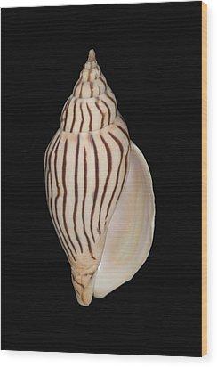 Shell Pattern - Bw Wood Print by Bill Brennan - Printscapes