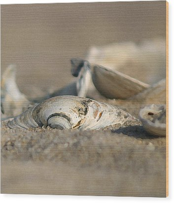 Shell Pile Wood Print by Mary Haber