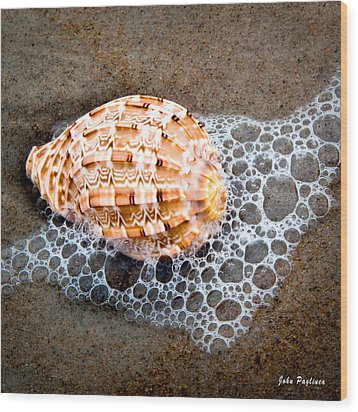 Shell Series No. 4 Wood Print
