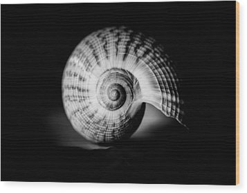 Shell Study No. 001 Wood Print