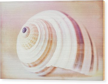 Shell Study No. 02 Wood Print