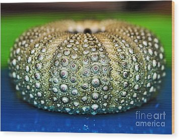 Shell With Pimples Wood Print by Kaye Menner