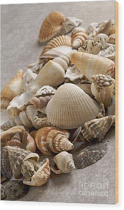Shellfish Shells Wood Print by Bernard Jaubert