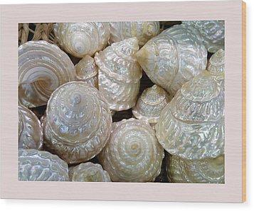 Shells - 4 Wood Print by Carla Parris