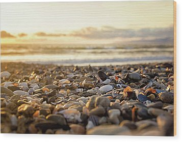 Wood Print featuring the photograph Shells At Sunset by April Reppucci