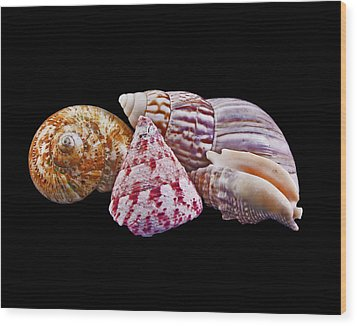 Shells On Black Wood Print by Bill Barber