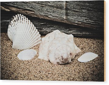 Shells On The Beach Wood Print by David Hahn