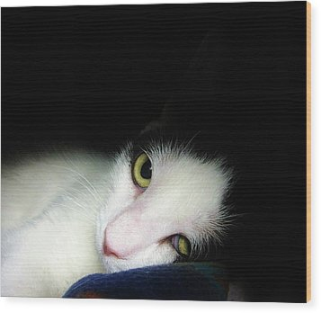 Shelter Cat Wood Print