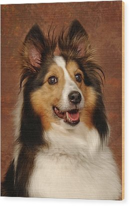 Wood Print featuring the photograph Sheltie by Greg Mimbs