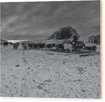 Wood Print featuring the photograph Shepherds Work by Keith Elliott