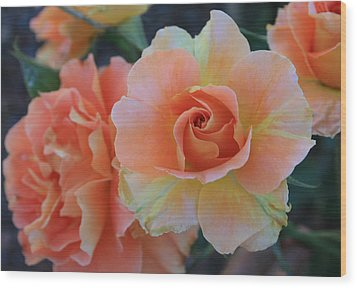 Sherbert Rose Wood Print by Marna Edwards Flavell