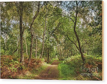 Wood Print featuring the photograph Sherwood Forest, England by Colin and Linda McKie