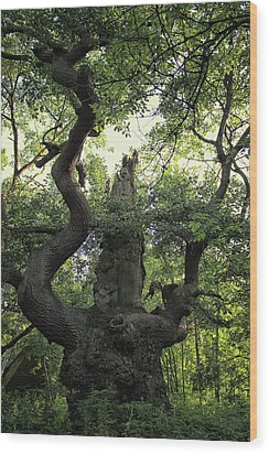 Sherwood Forest Wood Print by Martin Newman