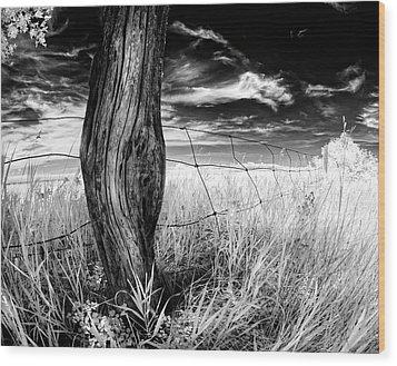 Wood Print featuring the photograph She's Got Legs by Dan Jurak