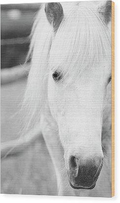 Shetland Pony Wood Print by Tina Lee