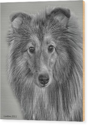 Shetland Sheepdog Wood Print by Larry Linton