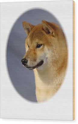 Shiba Inu 566 Wood Print by Larry Matthews