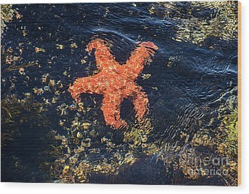 Wood Print featuring the photograph Shimmering Starfish by Susan Wiedmann
