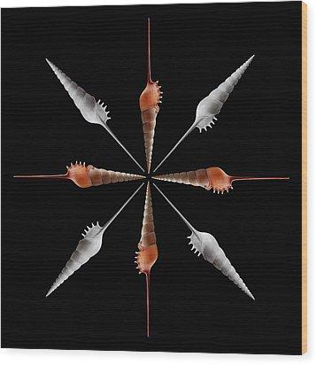 Shinbone Tibia Geometric Wood Print