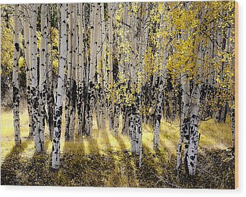 Shining Aspen Forest Wood Print by The Forests Edge Photography - Diane Sandoval