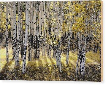 Shining Aspen Forest Wood Print