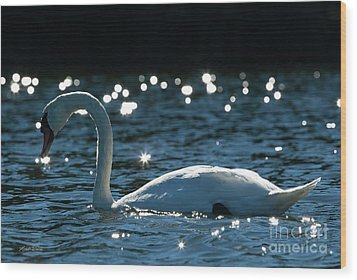 Wood Print featuring the photograph Shining Swan by Michelle Wiarda