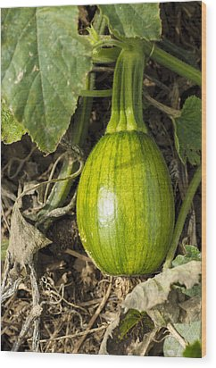 Wood Print featuring the photograph Shiny Squash by Christi Kraft