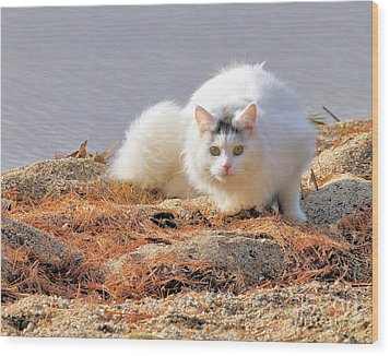 Shore Kitty Wood Print by Debbie Stahre