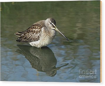 Wood Print featuring the photograph Short-billed Dowitcher by Sharon Talson