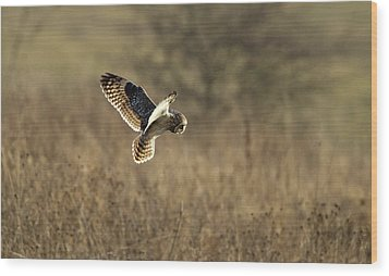 Short-eared Owl About To Strike Wood Print