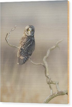 Wood Print featuring the photograph Short-eared Owl by Angie Vogel