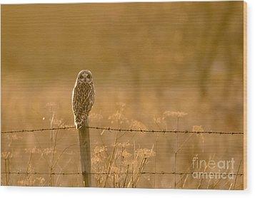 Short-eared Owl At Sunset Wood Print