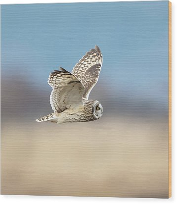 Wood Print featuring the photograph Short-eared Owl In Flight by Angie Vogel